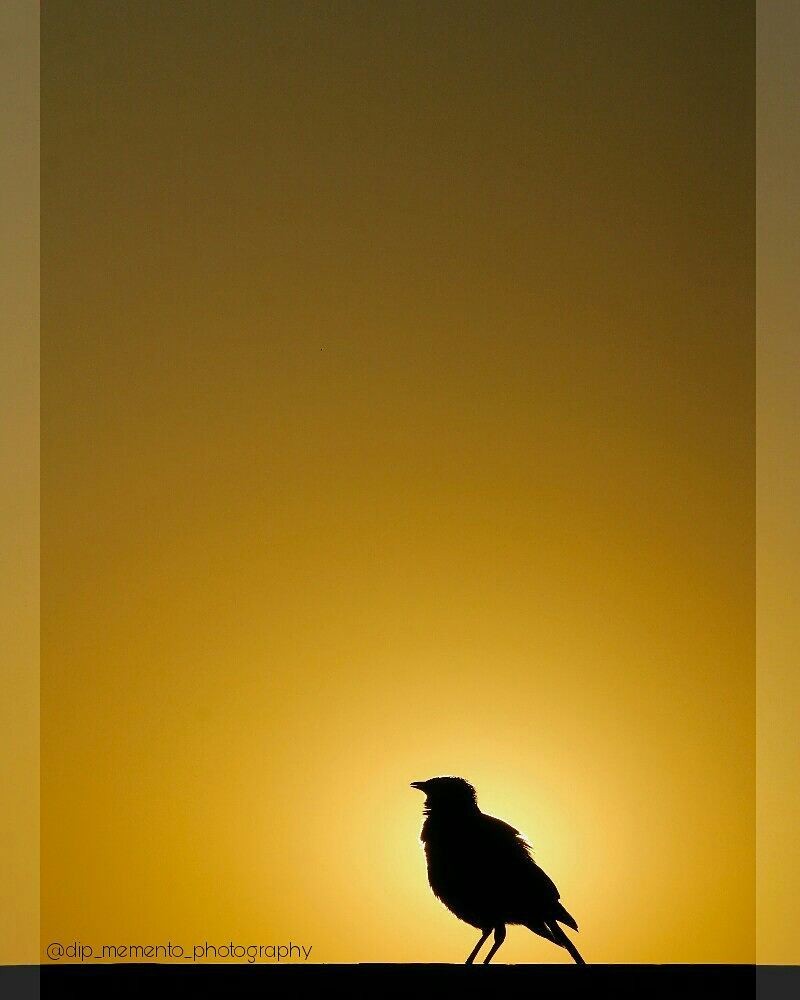 Its summer Morning .. #photography #photo #photographer #photooftheday #nature #photoshoot #canon #travel #art #nikon #picoftheday #beautiful #model #landscape #portrait #instagram #instagood #photos  #shillouette #photograph #sky #picture  #summer #pic  #indiaclicks #photographers_of_india #foto4everofficial #bird #sunrise #eneloopphotocontest